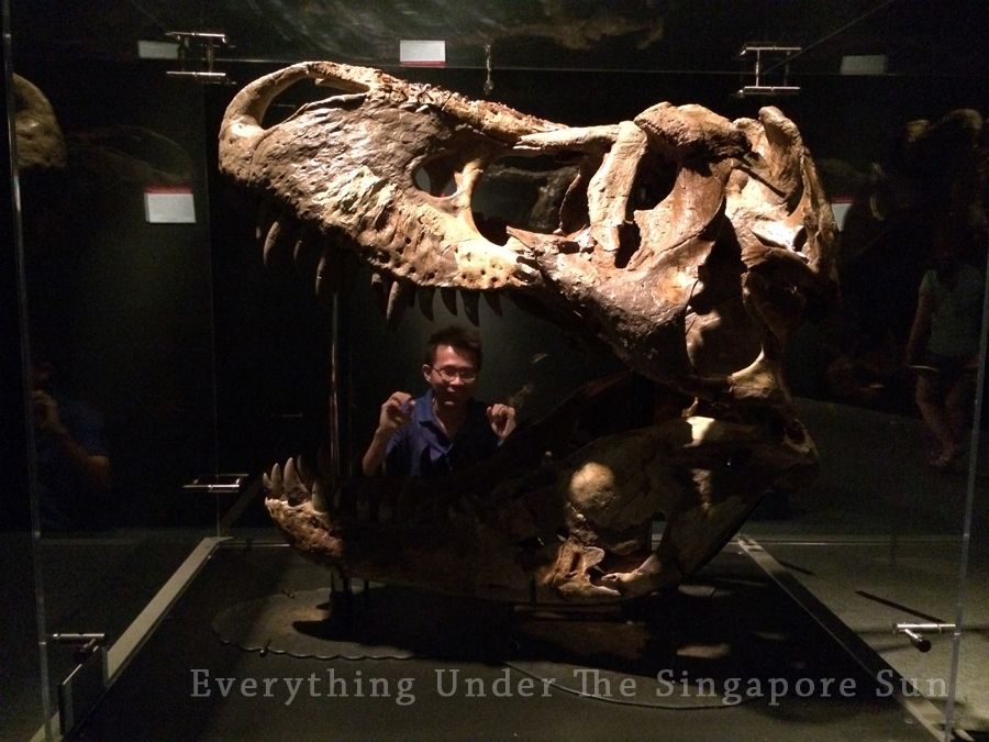 dinosaurs-science-center- (10)