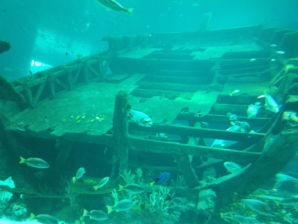 Nice shipwreck display for fishes to hide and mingle.