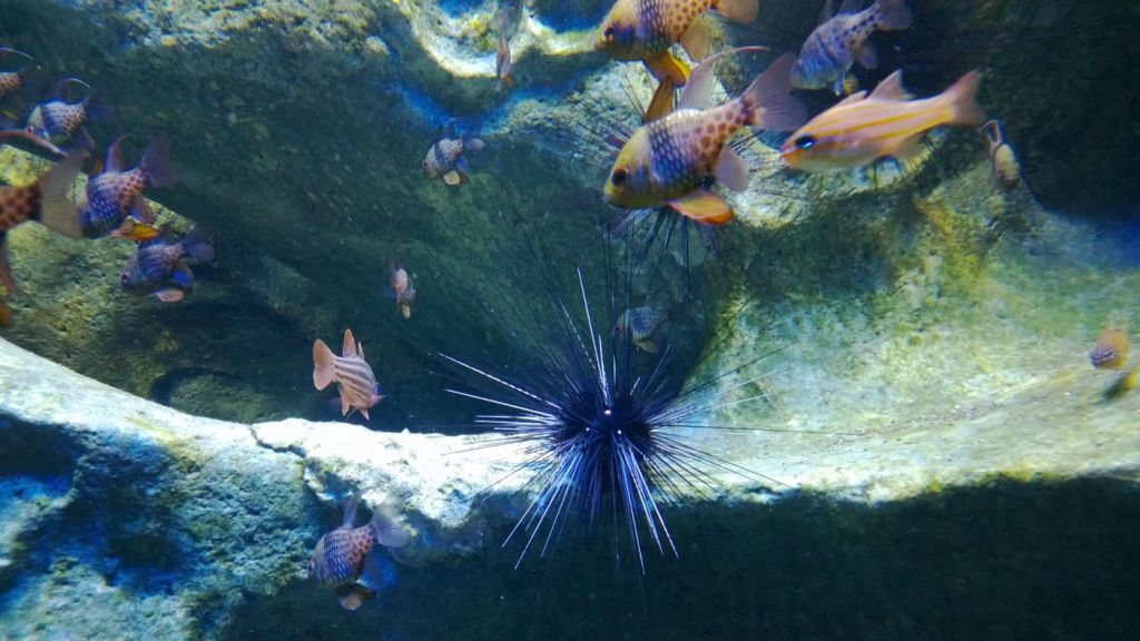 A pointy sea urchin. Get past those spikes and its soft innards are sweet and savoury.