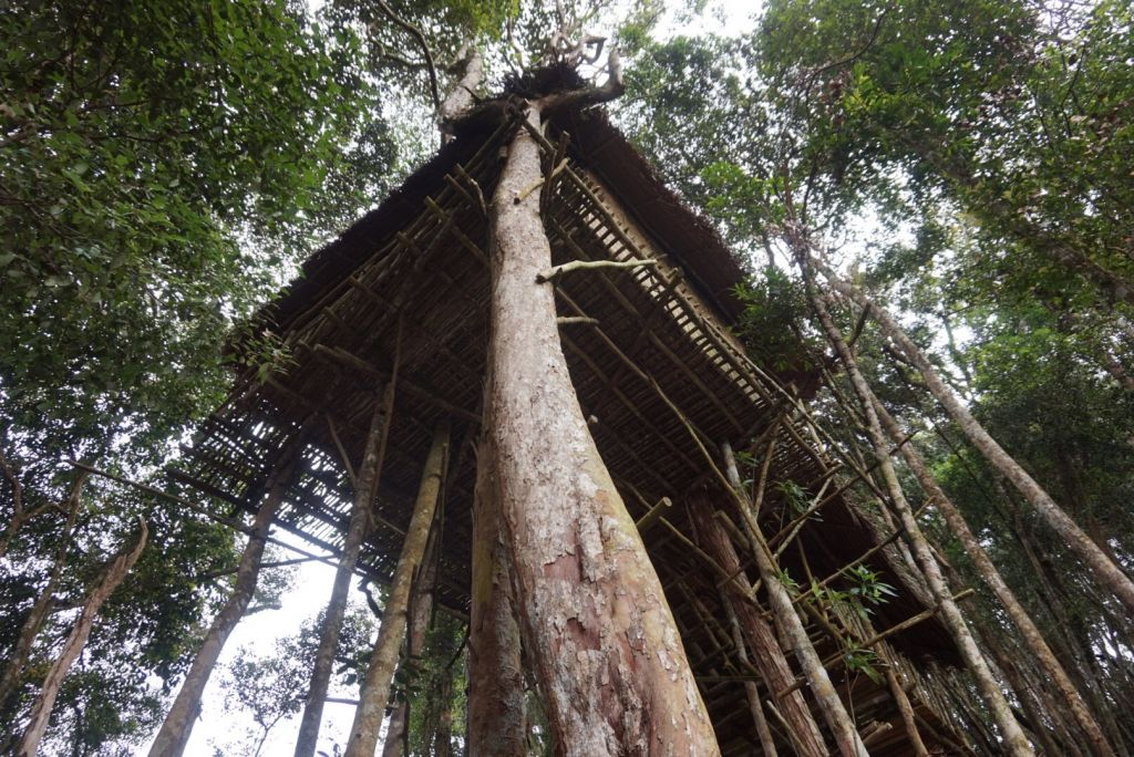 Amazing Treehouses in Cameron Highlands