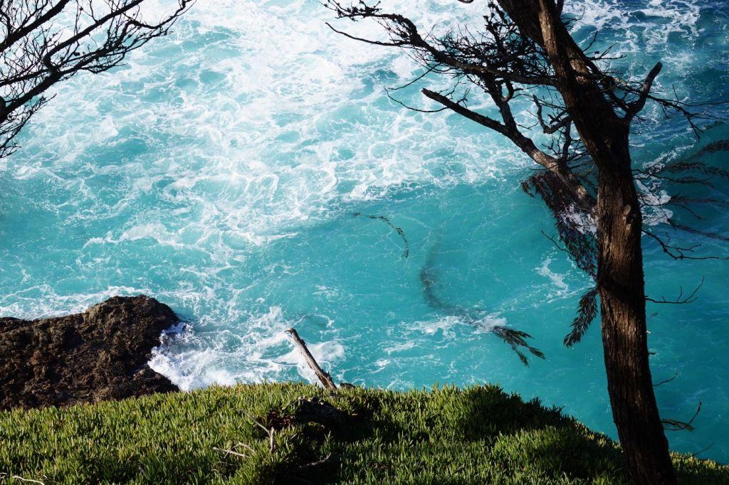 Kelp Pacific Ocean