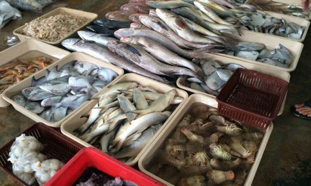 Freshest Fish: Pontian Fish Market